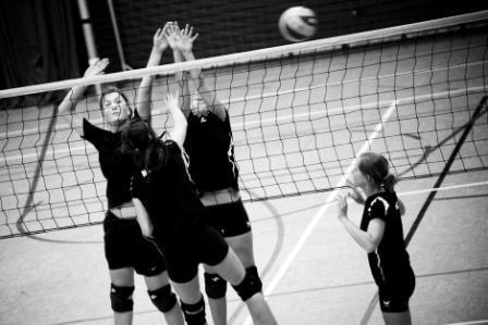 Volleyball Profis